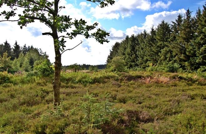 Schobüller Wald
